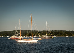 Boats moored at Essex (hickamorehackamore) Tags: 2016 ct ctriver connecticut connecticutriver essex summer sailboats