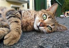 meow (maramillo) Tags: maramillo cy