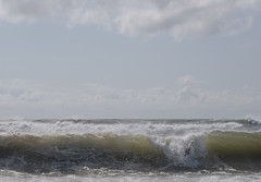 Wave (Several seconds) Tags: hamptons hurricane laborday2016 ocean atlanticbeach lifeguard bodysurfer bigwave beach swimming curl bodysurf newyork suffolkcounty amagansett thehamptons water weather youth
