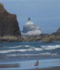 tilly over there (carolyn_in_oregon) Tags: oregon pacificocean ecolastatepark coast crescentbeach
