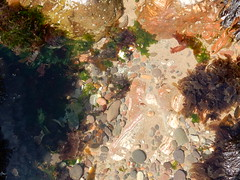 Rock pool, Lunan Bay (Beth M527) Tags: 2016 scotland thesea northsea beaches lunanbay angus rockpools