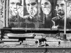 Homeless (Daniel Coitio) Tags: perro vias colchn