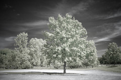 Just a tree (Tom Hughes Photo) Tags: canon infrared tree michigan addison oaklandcountyparks hoya r72 filter