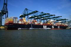 MSC Venice DST_4644 (larry_antwerp) Tags: psa psaterminal container mediterraneanshipping mscvenice nyk nykdeneb mpet antwerp antwerpen       port        belgium belgi          schip ship vessel        schelde