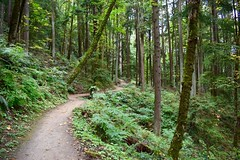 Portland OR, Forest Park #wildwoodtrail #forest #portland #forestpark #hikes #hiking #pacificnorthwest (tj_arriaga) Tags: nikond5500 nature trails oregon wildwoodtrail forest portland forestpark hikes hiking pacificnorthwest