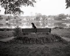 MONKEY (fsuptown) Tags: dog lambertville nj newjersey