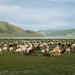 Fomos rodeados por cabras e carneiros