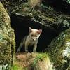 Lobezno (Dani Gil Marínez) Tags: españa naturaleza zoo asturias lobo lobezno