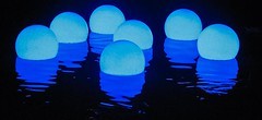 SO, Blue Balls eh? (GIALIAT) Tags: pink blue red plants white black green water animal yellow gardens night fun botanical lights concert pond bush magic creative january event blacklight wellington local duckpond asb beegees 2013 gialiat pallion lightshop silverfx