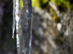 Icicles (duncan_ireland) Tags: scotland january icicle loch icicles inverness strathnairn inverarnie