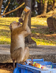 Mot keo (AltS Kingdom) Tags: sea sun tree nature water set thailand monkey town hill mangrove thai kata phuket patong bang tao karon khao surin kamala chalong rang rawai alts