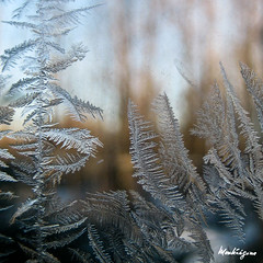 Magic Frost - Frie givre (monteregina) Tags: morning windows winter sun canada abstract macro art ice window nature water glass colors closeup droplets eau frost crystals couleurs fenster hiver details natur sparkle textures qubec designs condensation abstraction transparent ferns eis fentre sparkling formations icecrystals glace givre matin jackfrost eisblumen fougres vitre frostedglass gouttes abstrait iceart eiskalt kristalle cristaux iceflowers frostflower eiskristalle frostywindow icepatterns monteregina icecolors fentregivre motifsdeglace crystalsdeglace frostycrystals frondsinice