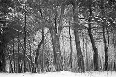 (Modular) Tags: trees film forest 50mm diafine 135 expired wald bume nikonf4 macoort25c