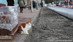 Inspectie van het werk (Maurits van den Toorn) Tags: cat kat chat denhaag katze puss poes thehague kater theresiastraat