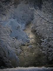Mother Nature's Jewel Duvet (AincaArt) Tags: tree creek schweiz switzerland ast branch suisse bach svizzera sheen baum eveninglight berneroberland berneseoberland mountaincreek abendlicht svizra schimmer bergbach mungga snowybranch canonixus80is mothernaturesjewelduvet aincaart