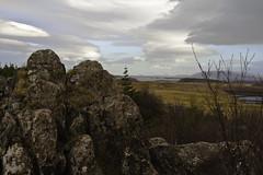 Í klettunum (geh2012) Tags: sea tree clouds iceland ísland sjór tré stykkishólmur snæfellsnes ský klettar geh gunnareiríkur