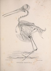 n118_w1150 (BioDivLibrary) Tags: birds anatomy bones smithsonianinstitutionlibraries bhl:page=41399005 dc:identifier=httpbiodiversitylibraryorgpage41399005 2016bioblitz