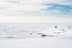 Watching the sea (henri_ilanen) Tags: j kaivopuisto meri talvi uunisaari winter ice snow sea watching lone man helsinki finland sky blue cascadingice eira