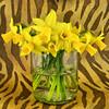 Daffodils (njk1951) Tags: spring squareformat daffodils yellowdaffodils animalprint inthewild springdaffodils tatot magicunicornverybest magicunicornmasterpiece blinkagain bestevercompetitiongroup