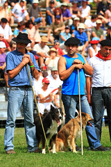 Concours chiens bergers (www.pyrenees-bearnaises.com) Tags: traditions fte march fromage stands chants transhumance bergers danses machinesagricoles produitslocaux concoursdechiensdebergers ftedesbergers purnesbarnaises