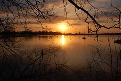 Oulton Broad sunset (series) (Kirkleyjohn) Tags: winter sunset sky sun reflection silhouette reflections atardecer suffolk sonnenuntergang prdosol eastanglia coucherdusoleil norfolkbroads oultonbroad