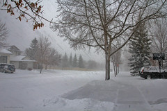 Winter blast (Una S) Tags: city winter white snow canada storm streets calgary poor deep alberta snowing blizzard blast visibility