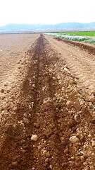 0028VIÑEDOS-plantar-injertos-(22-3-2013)-P1020031 (fotoisiegas) Tags: viticultura viñas viñedos cariñena plantar injertos fotoisiegas lospajeras