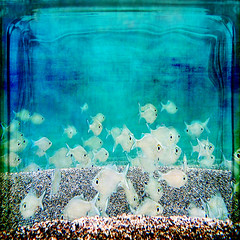 there isn't any symbolism... the fish is a fish (1crzqbn) Tags: blue sunlight fish color nature reflections square underwater bokeh textures ie hypothetical  vividimagination artdigital innamoramento trolled memoriesbook awardtree magicunicornverybes