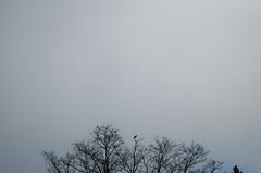 bird (Levan Kakabadze) Tags: