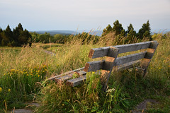 Bench - Bank (Lala89_Photos) Tags: bench bank sunlight sonnenlicht schwarzwald black forest schliffkopf gras grass green grn