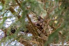 Les yeux plus gros que le ventre (Guillaume About) Tags: canon squirrel cureuil