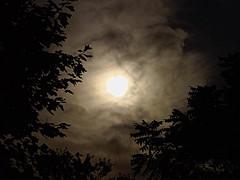 P7199615 (Paul Henegan) Tags: trees moon clouds silhouettes waxinggibbous nwn 07621