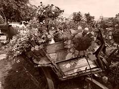 P6080786dasftt (photos-by-sherm) Tags: good quilts retail garden flowers sculpture yard accessories amana iowa summer decorations metal