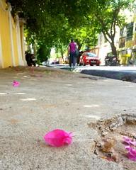 Pondicherry (ossington) Tags: pondicherry india bokeh flora flowerpetal southindia