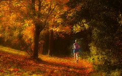 Morning run (Steve-h) Tags: nature natur natura naturaleza sport athlete runner woman girl lady autumn fall sun sunny sunlight sunshine hill shade shadows path leaves trees hedge riverside riverbank dodder rathfarnham dublin ireland europe colour colours red orange gold yellow digital exposure eos ef canon telephoto zoom lens november 2015 blonde