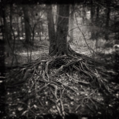 Them. (Creepella Gruesome) Tags: iphone6splus hipstamatic nature woods tree roots gnarled squareformat blackandwhite spooky creepy phantasm