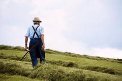 Simbiosi (Marta Marcato) Tags: old man oldman farm farming work working sky field earth blue vecchio uomo fattoria agricoltura coltivare lavoro lavorare cielo campo terra blu nikond7200
