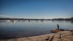 Waterscape at Saratoga (Merrillie) Tags: saratoga nature australia person nswcentralcoast kayak newsouthwales sea nsw brisbanewater fishing centralcoastnsw waterscape bay centralcoast ducks davistown