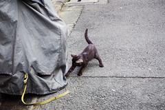 Today's Cat@2016-08-20 (masatsu) Tags: cat catspotting thebiggestgroupwithonlycats pentax mx1