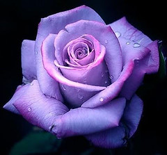 Purple flower (beddinginnreviews) Tags: beddinginnreviews fashion reviewsbeddinginn woman style beautiful comfortable