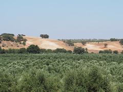 P7313630 (Matt Lancashire) Tags: portugal alentejo valedofreixo montedoramalho fields hills olive