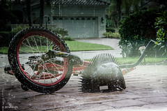 Left In The Rain! (BGDL) Tags: lightroomcc nikond7000 bgdl afsnikkor18105mm13556g florida bicycle helmet driveway rain textures 7daysofshooting week7 archives focusfriday
