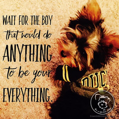 Id wait forever for you. (itsayorkielife) Tags: yorkiememe yorkie yorkshireterrier quote