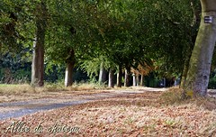 2016-09-02 evening  walk (5)alle du chteau (april-mo) Tags: countrylife countryside autumn fall landscape farming france franceimage nord wood autumncolors deadleaves feuillesmortes