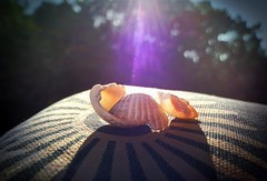 shiny.shells I (C.Kalk DigitaLPhotoS) Tags: muschel shell shells sonne sunlight reflection reflektion macro closeup stilllife sonnig sunny shiny schatten shadow sonnenlicht kissen pillow