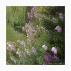 Pretty in Pink (www.damientaylor.co.uk) Tags: prettyinpink flowers plants bloom bush tree closeup square multipleexposure intentionalcameramovement me icm creative impressionism impressionistic painterly gardens monet govern france