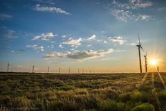 West Texas Morning (9 of 40) (mharbour11) Tags: wildcats elk purple sunrise westtexas texas sky windturbines windmill sun silhouettefire silhouette
