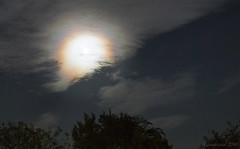 Last night's Moon barked loud and clear (lunaryuna) Tags: england surrey night nightsky nocturnalphotography moon moondog atmosphericphenomenon shine moonring beauty cloudscape howlingtothemoon lunaryuna