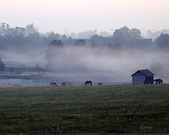 Ghosts of the Bluegrass (johncarey/) Tags: mist field ghosts horsefarm