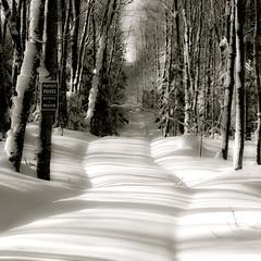 Chemin effacé... barrières d'ombres... je ne peux plus passer...!!! (Denis Collette...!!!) Tags: shadow canada quebec path ombre québec barrier passage mauricie chemin forêt montauban barrière boisé notredamedemontauban mékinac